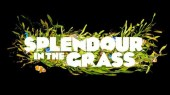 Photo of Splendour In grass